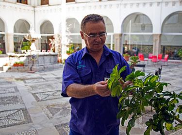 Proceso selectivo - Jardinería